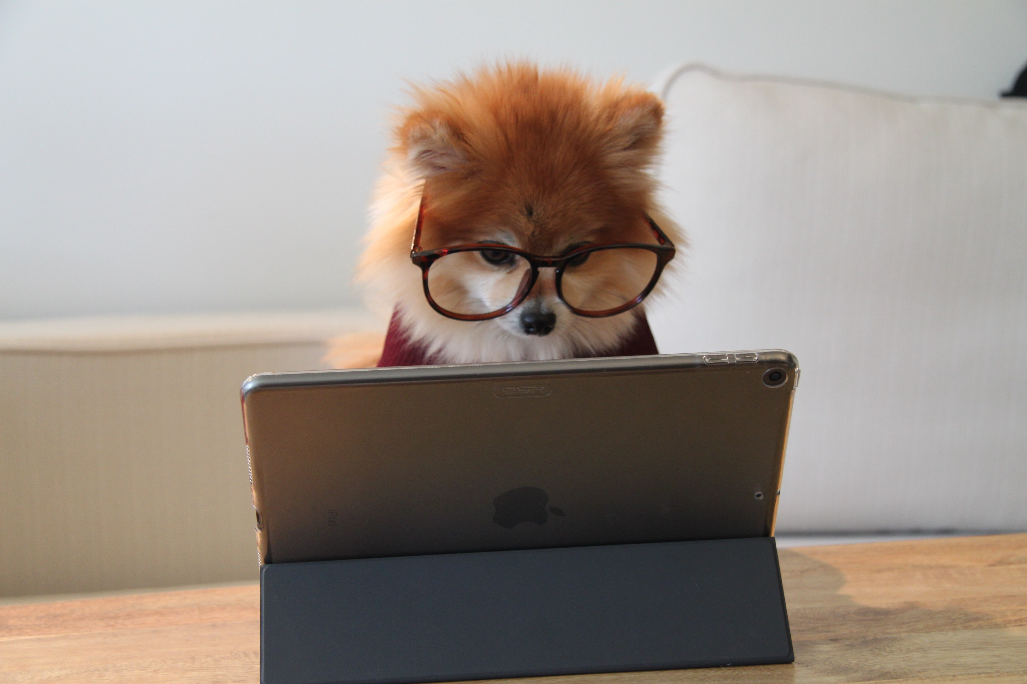 Dog waiting for website to load